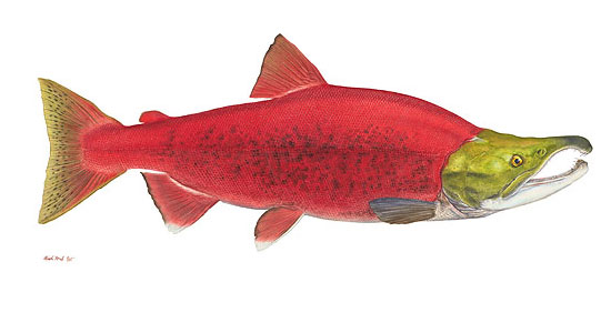 Steelhead Salmon Painting http://www.greenwichworkshop.com/catalogue/feb07/32-32.asp