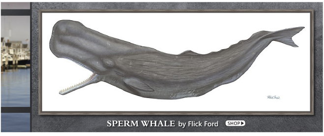 Sperm Whale by Flick Ford