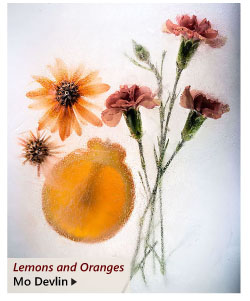 """""""Lemons and Oranges"""" by Mo Devlin"""