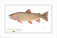 Yellowstone Cutthroat&lt;br&gt; OPEN EDITION PRINT