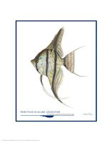 Peruvian Scalare Angel Fish&lt;br&gt; OPEN EDITION PRINT