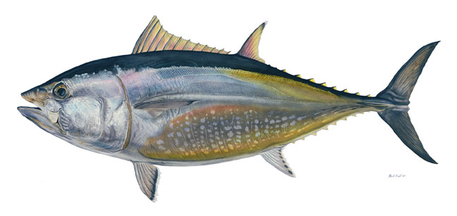 Flick Ford - Blue Fin Tuna -  MASTERWORK CANVAS EDITION Published by the Greenwich Workshop
