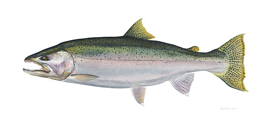 Flick Ford - Steelhead -  LIMITED EDITION CANVAS Published by the Greenwich Workshop