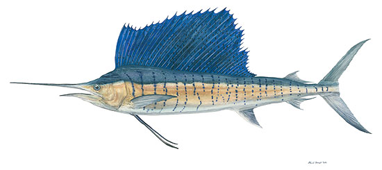 Sailfish<br> LIMITED EDITION CANVAS