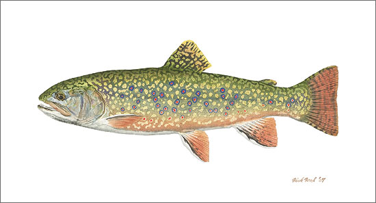 Flick Ford - Pennsylvania Brook Trout -  LIMITED EDITION CANVAS Published by the Greenwich Workshop