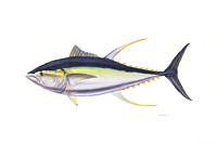 Trophy Yellowfin Tuna<br> MASTERWORK CANVAS EDITION