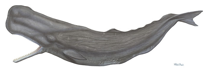 Flick Ford - Sperm Whale -  MUSEUMEDITION CANVAS Published by the Greenwich Workshop