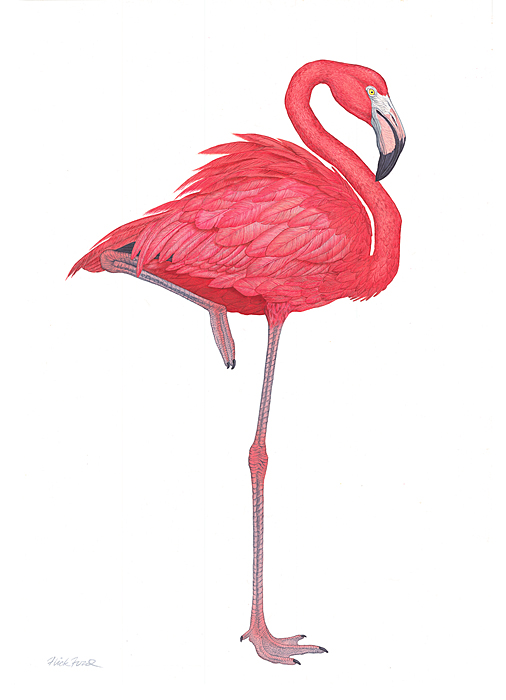Flick Ford - Flamingo -  LIMITED EDITION CANVAS Published by the Greenwich Workshop