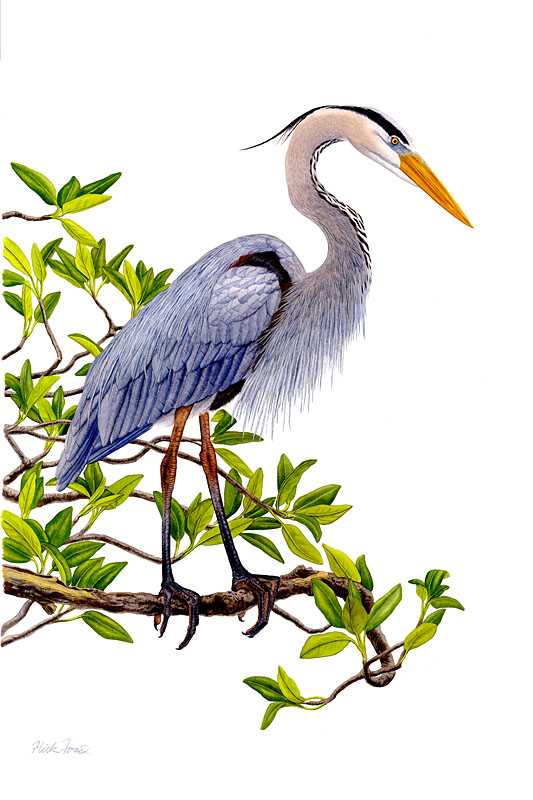 Flick Ford - Heron in Mangrove -  LIMITED EDITION CANVAS Published by the Greenwich Workshop