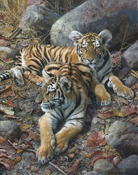 Carl Brenders - Endangered Ambassadors-Tiger Cubs -  LIMITED EDITION CANVAS Published by the Greenwich Workshop
