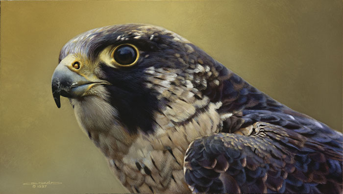 Carl Brenders - Peregrine Falcon Portrait -  LIMITED EDITION PRINT Published by the Greenwich Workshop