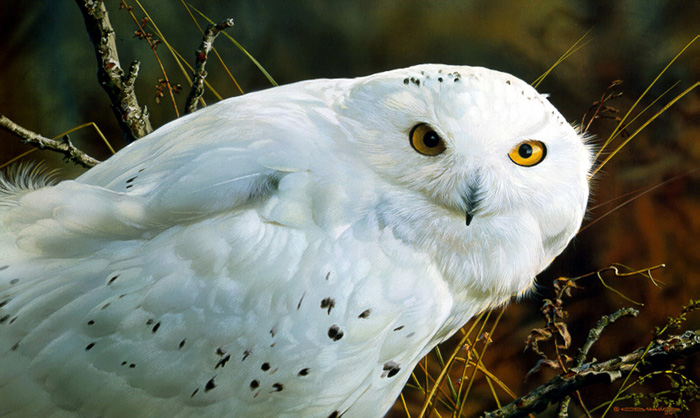Carl Brenders - Amber Gaze-Snowy Owl -  LIMITED EDITION PRINT Published by the Greenwich Workshop