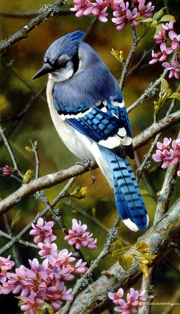Carl Brenders - Flash of Sapphire - Blue Jay -  LIMITED EDITION PRINT Published by the Greenwich Workshop