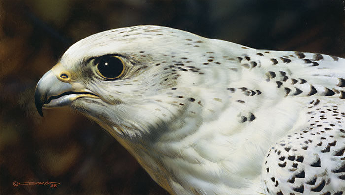 Carl Brenders - Gyrfalcon Portrait -  LIMITED EDITION PRINT Published by the Greenwich Workshop