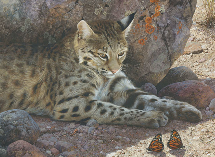 Carl Brenders - Off Limits - Bobcat -  LIMITED EDITION PRINT Published by the Greenwich Workshop