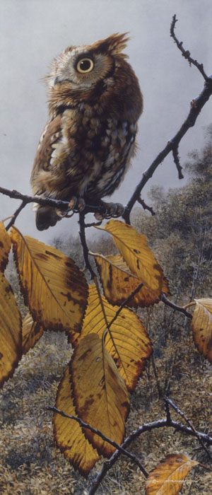 Carl Brenders - Fireball - Screech Owl -  LIMITED EDITION PRINT Published by the Greenwich Workshop
