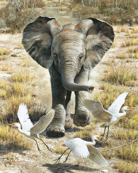 Carl Brenders - Flushing Egrets-Elephant Calf -  LIMITED EDITION CANVAS Published by the Greenwich Workshop