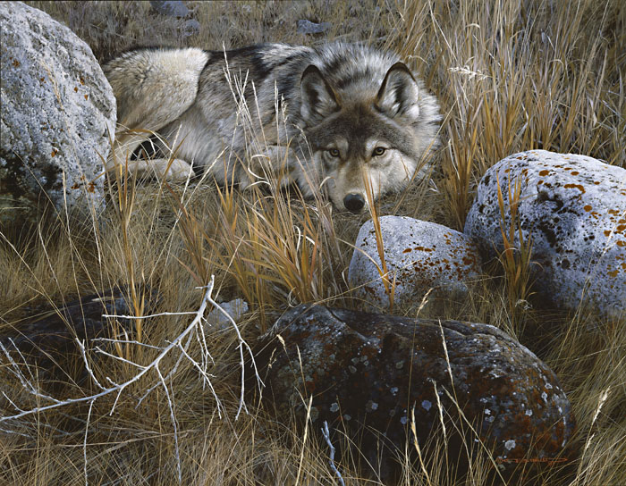 Carl Brenders - One to One - Gray Wolf -  MASTERWORK CANVAS EDITION Published by the Greenwich Workshop