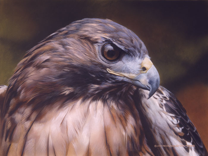 Carl Brenders - Red Alert -Red Tailed Hawk -  LIMITED EDITION PRINT Published by the Greenwich Workshop