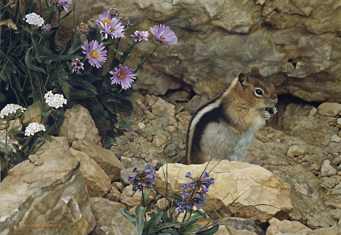 Carl Brenders - Trail Mix-Golden Mantle Ground Squirrel -  LIMITED EDITION PRINT Published by the Greenwich Workshop