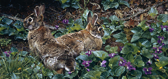 Carl Brenders - Violet Trails and Cottontails -  LIMITED EDITION PRINT Published by the Greenwich Workshop
