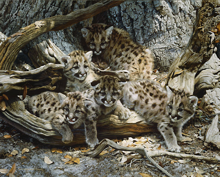 Carl Brenders - While the Cat´s Away -Cougar Cubs -  LIMITED EDITION PRINT Published by the Greenwich Workshop