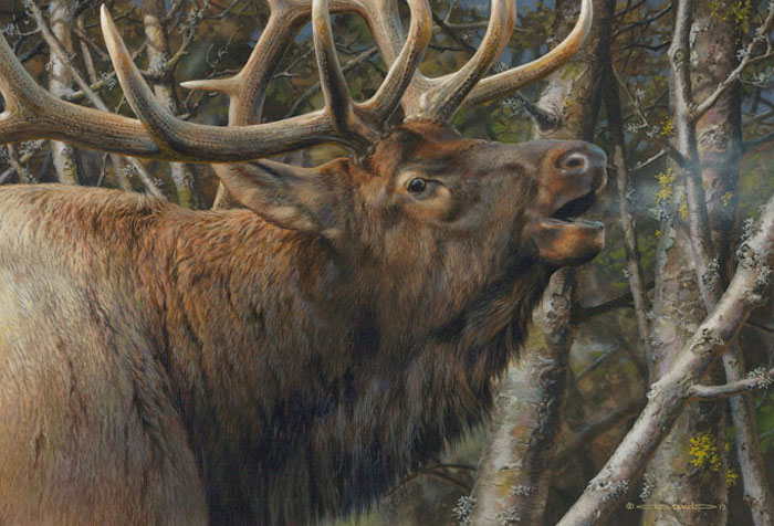Carl Brenders - Mating Call Bull Elk -  LIMITED EDITION CANVAS Published by the Greenwich Workshop