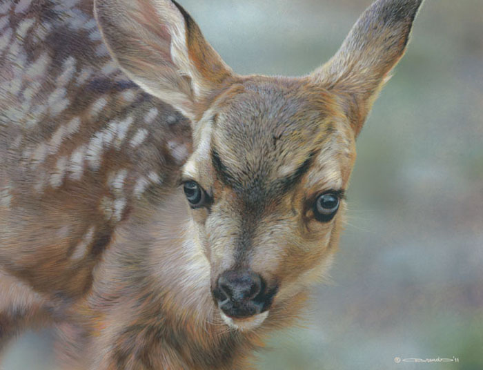 Carl Brenders - Spotted - Mule Deer Fawn -  LIMITED EDITION CANVAS Published by the Greenwich Workshop