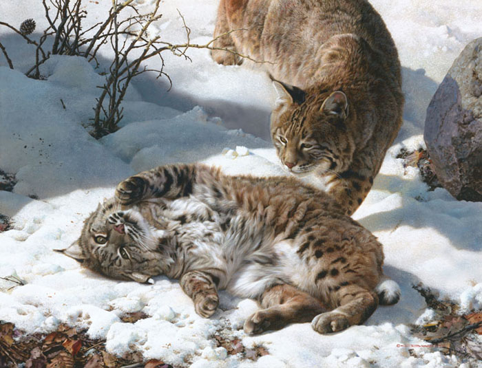 Carl Brenders - Love is in the Air - Bobcats -  LIMITED EDITION CANVAS Published by the Greenwich Workshop