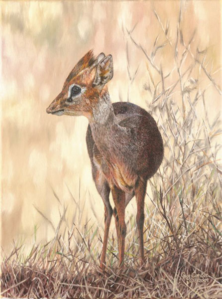 Guy Combes - Dik-Dik -  SMALLWORK CANVAS EDITION Published by the Greenwich Workshop