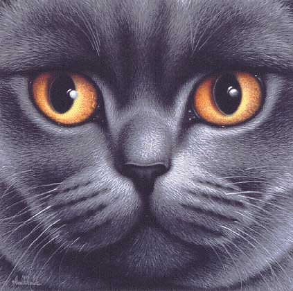 Braldt Bralds - BRITISH BLUE SHORTHAIR -  LIMITED EDITION PRINT Published by the Greenwich Workshop