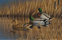 AFTERNOON MALLARDS&lt;br&gt; LIMITED EDITION PRINT