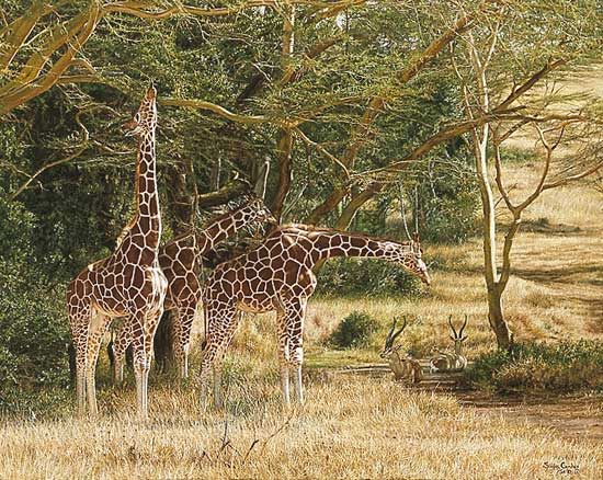 Simon Combes - TALL SHADOWS -  LIMITED EDITION PRINT Published by the Greenwich Workshop