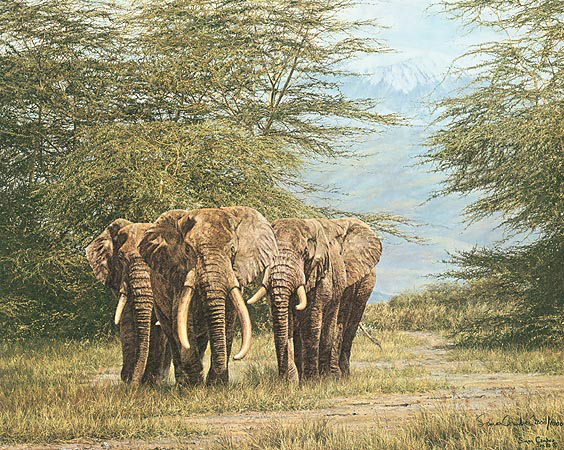 Simon Combes - AMBOSELI ANCIENTS -  LIMITED EDITION PRINT Published by the Greenwich Workshop