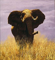 Tsavo Sentinel<br> LIMITED EDITION CANVAS