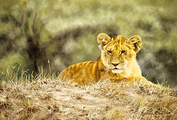 Simon Combes - Lion Cub -  LIMITED EDITION CANVAS Published by the Greenwich Workshop