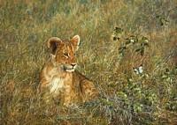 Lion Cub and Butterfly<br> SMALLWORK CANVAS EDITION