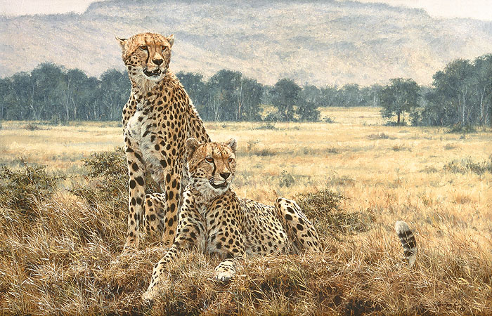 """Cheetah Pair"" by Simon Combes"