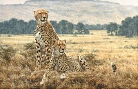 Cheetah Pair&lt;br&gt; LIMITED EDITION CANVAS
