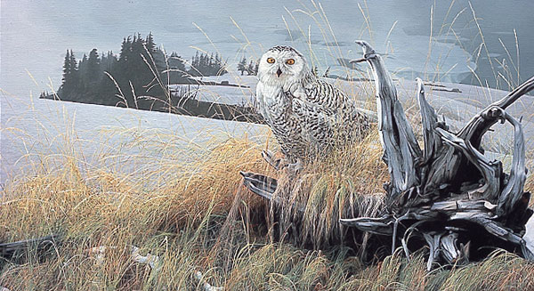 Rod Frederick - TUNDRA WATCH -  LIMITED EDITION PRINT Published by the Greenwich Workshop