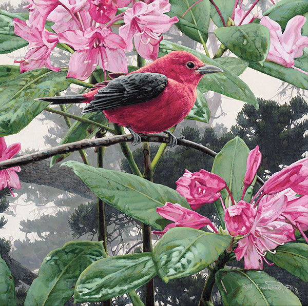 Rod Frederick - Scarlet Tanager -  SMALLWORK CANVAS EDITION Published by the Greenwich Workshop