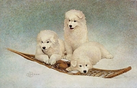SNOW BUDDIES<br> LIMITED EDITION PRINT