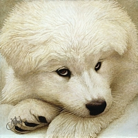 SAMOYED PUP<br> LIMITED EDITION PRINT