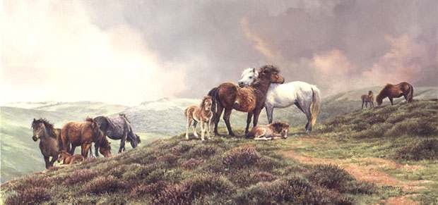 Bonnie Marris - THE DARTMOOR PONIES -  LIMITED EDITION PRINT Published by the Greenwich Workshop