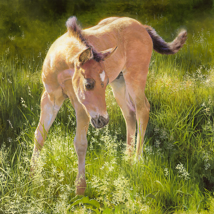 Bonnie Marris - Montana Colt -  LIMITED EDITION CANVAS Published by the Greenwich Workshop