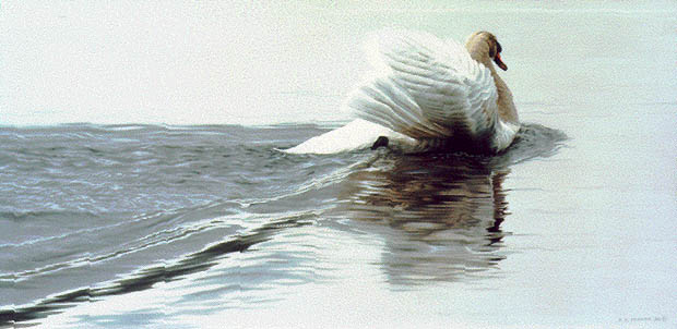 Ron Parker - GLIDING SWAN -  LIMITED EDITION PRINT Published by the Greenwich Workshop