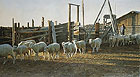 CHAUNCEY&amp;acute;S CORRALS&lt;br&gt; LIMITED EDITION PRINT