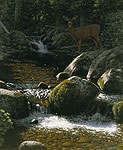 McCLELLAN CREEK&lt;br&gt; LIMITED EDITION PRINT