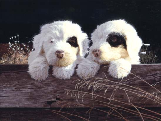 John Weiss - OLD ENGLISH SHEEPDOG PUPS -  LIMITED EDITION PRINT Published by the Greenwich Workshop