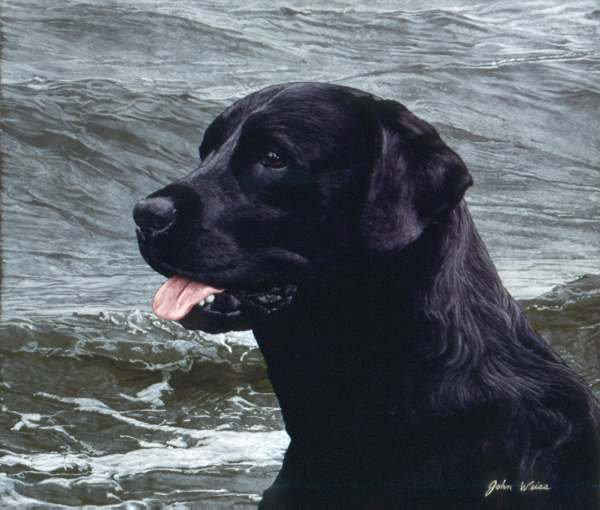 John Weiss - OF THE FINEST BREED: BLACK LABRADOR -  LIMITED EDITION PRINT Published by the Greenwich Workshop